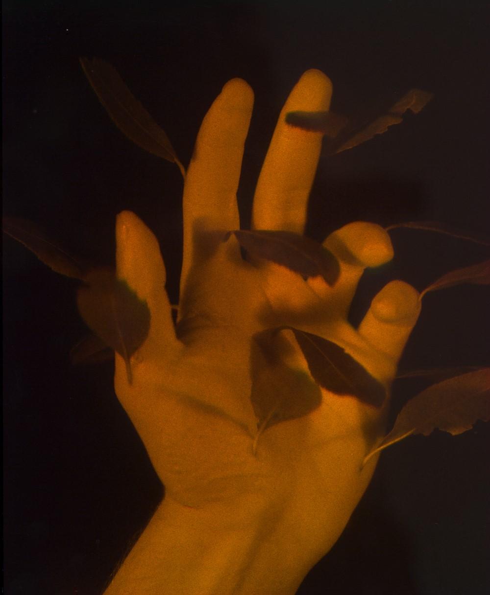 Daniel Steegmann Mangrané, Mano con hojas, 2013; Ologramma. Courtesy dell'artista, KADIST collection