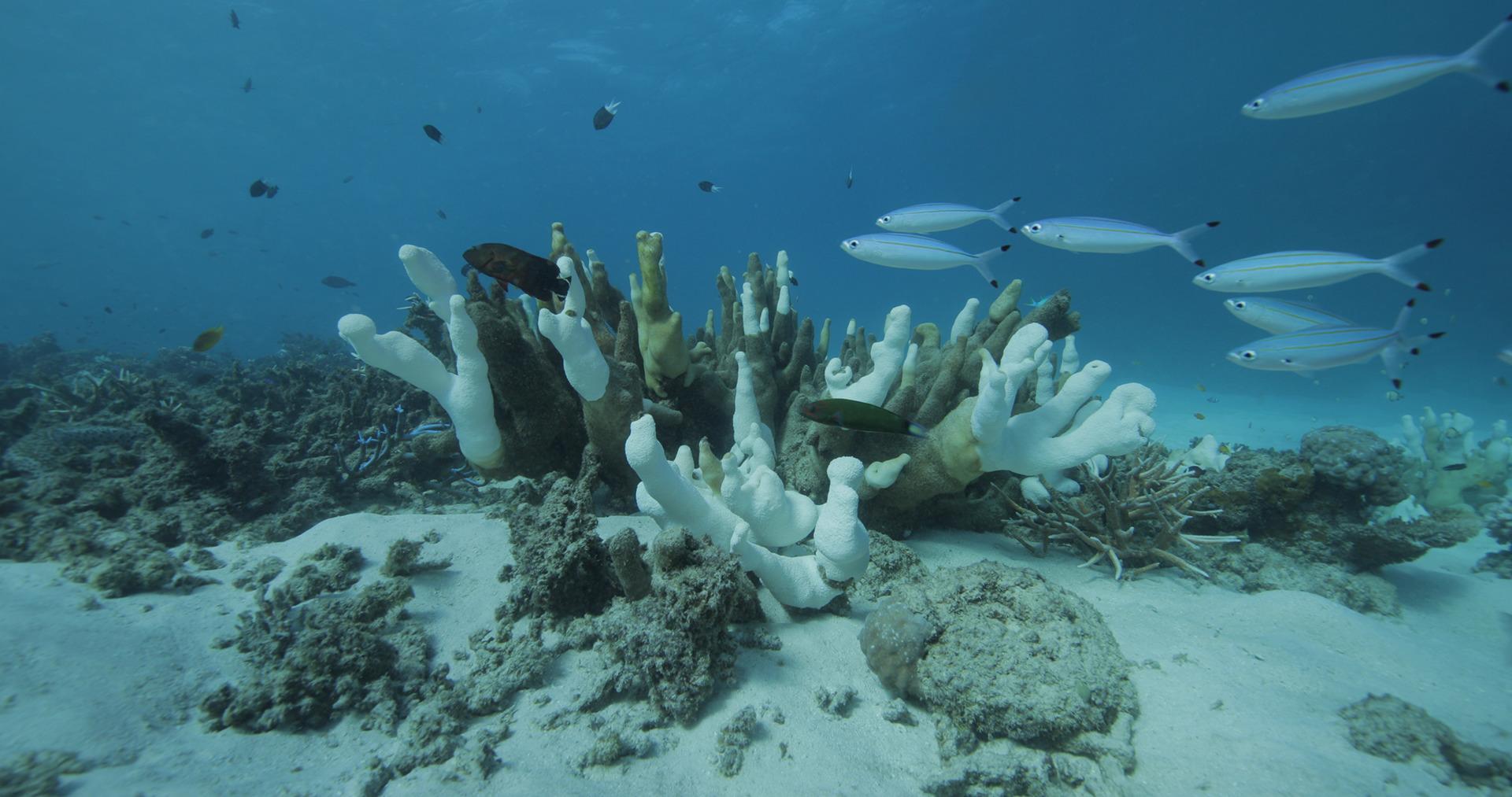 Grande Barriera Corallina in Australia. Film Still