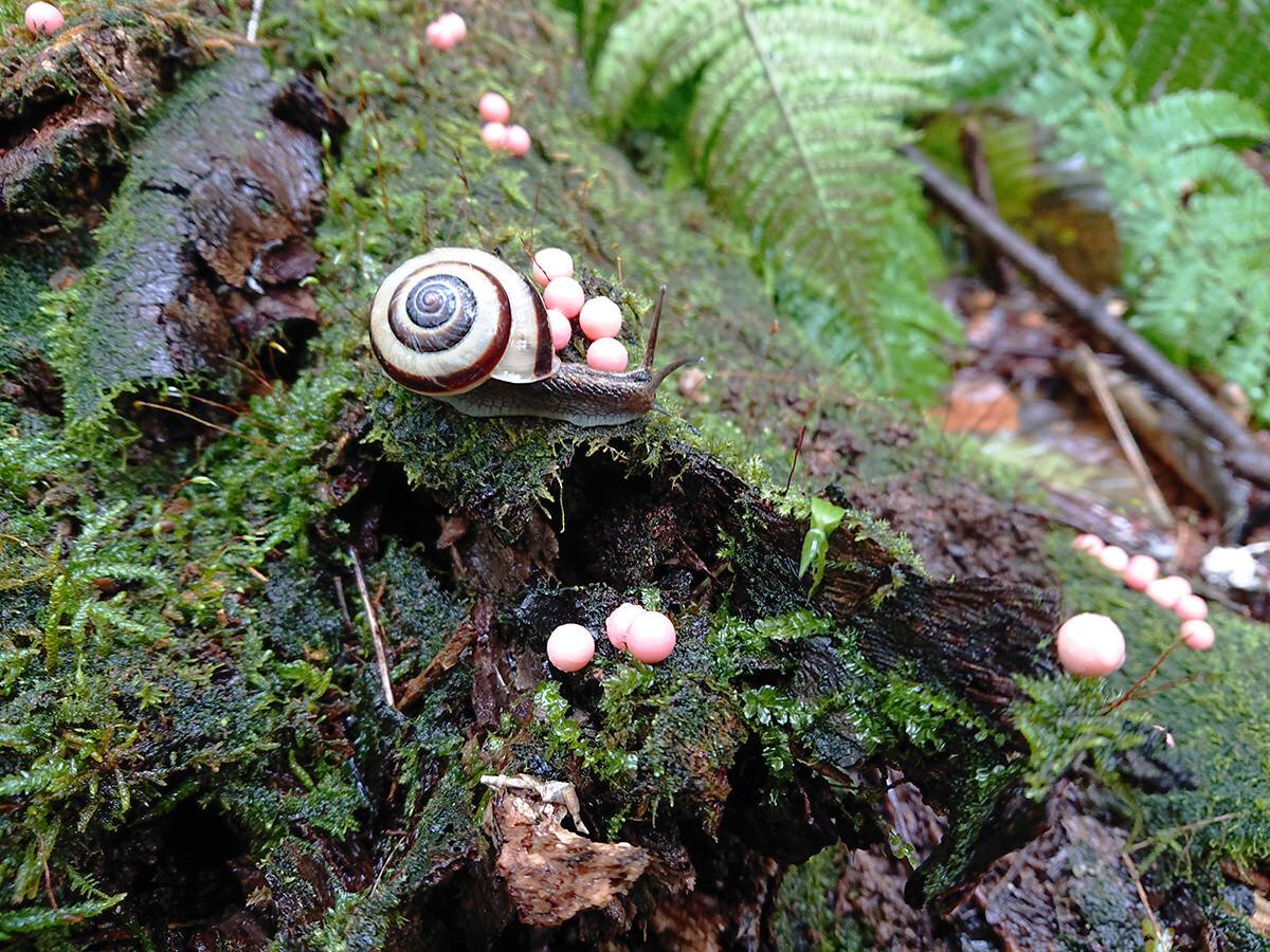Snail in the rain web.jpg