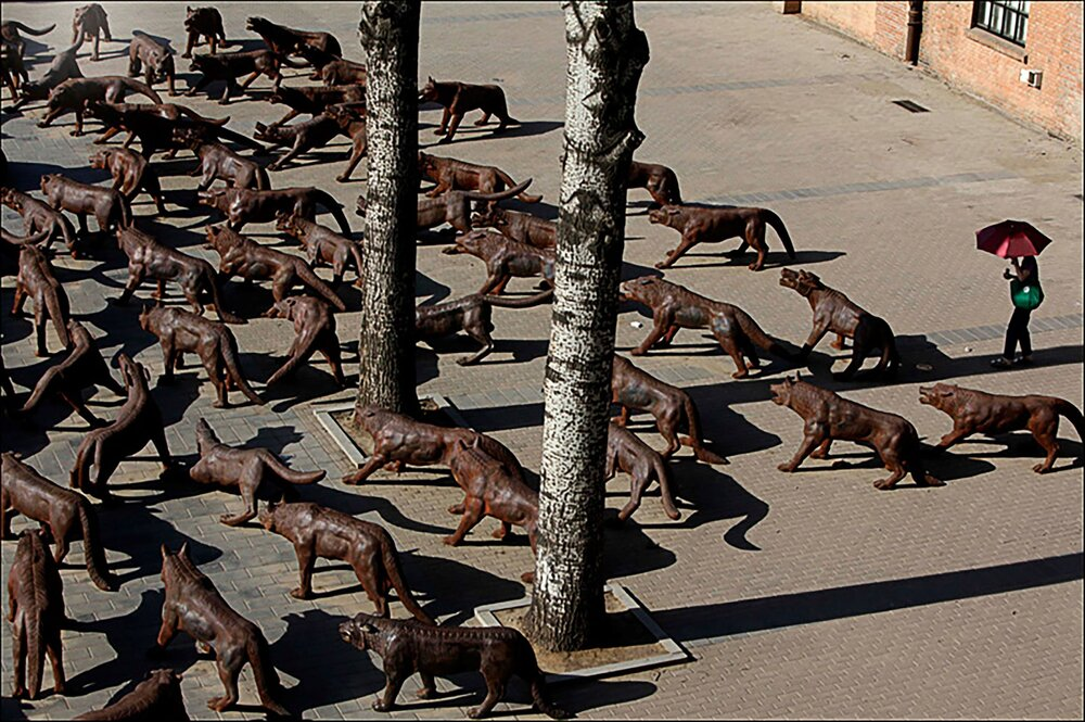 Liu Ruowang4 wolves coming ph. M. Stanzione.jpg