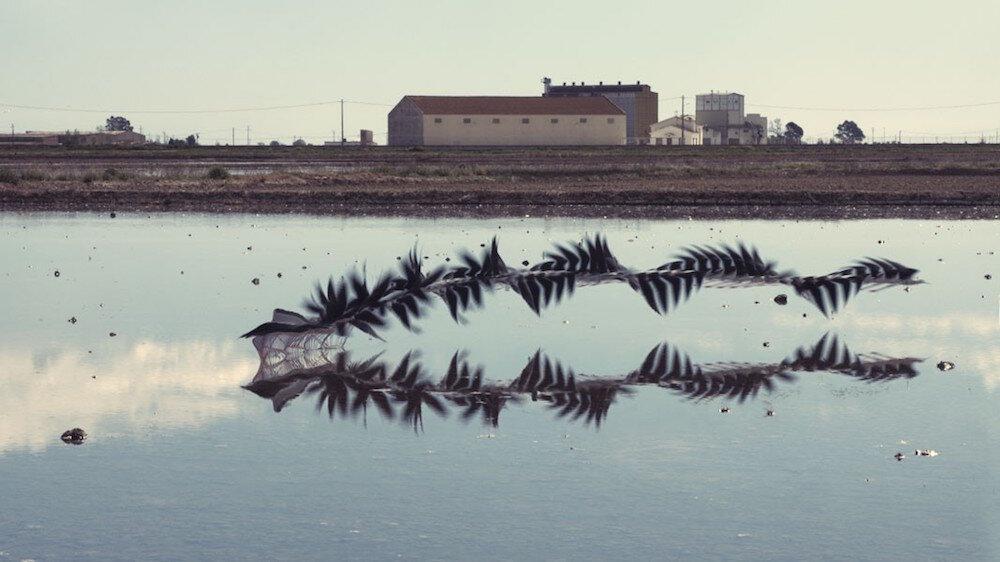 Stormi di uccelli in volo come ipnotici disegni a matita nel video e nelie foto di Xavi Bou