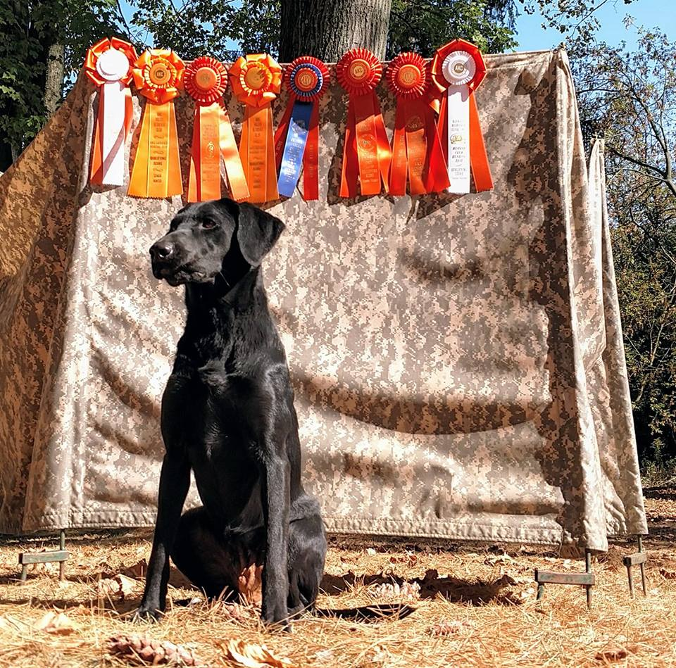 2017 was a great year for Charlotte. She went 8 for 8 to attain her JH and SH titles with the AKC.