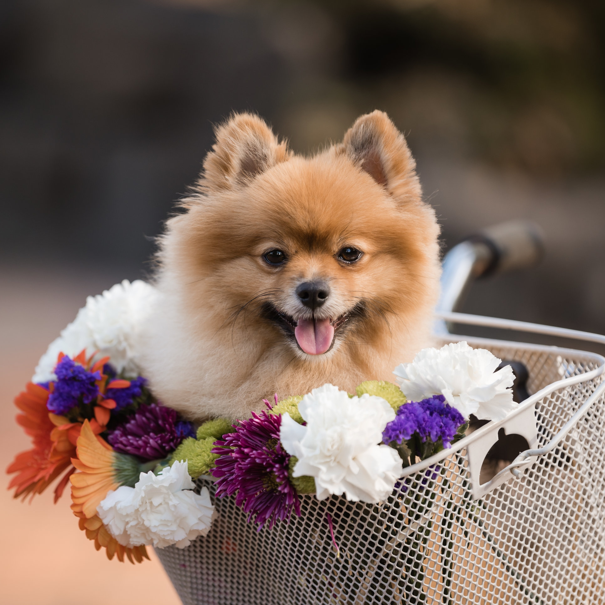 03-March-Pup-2.jpg