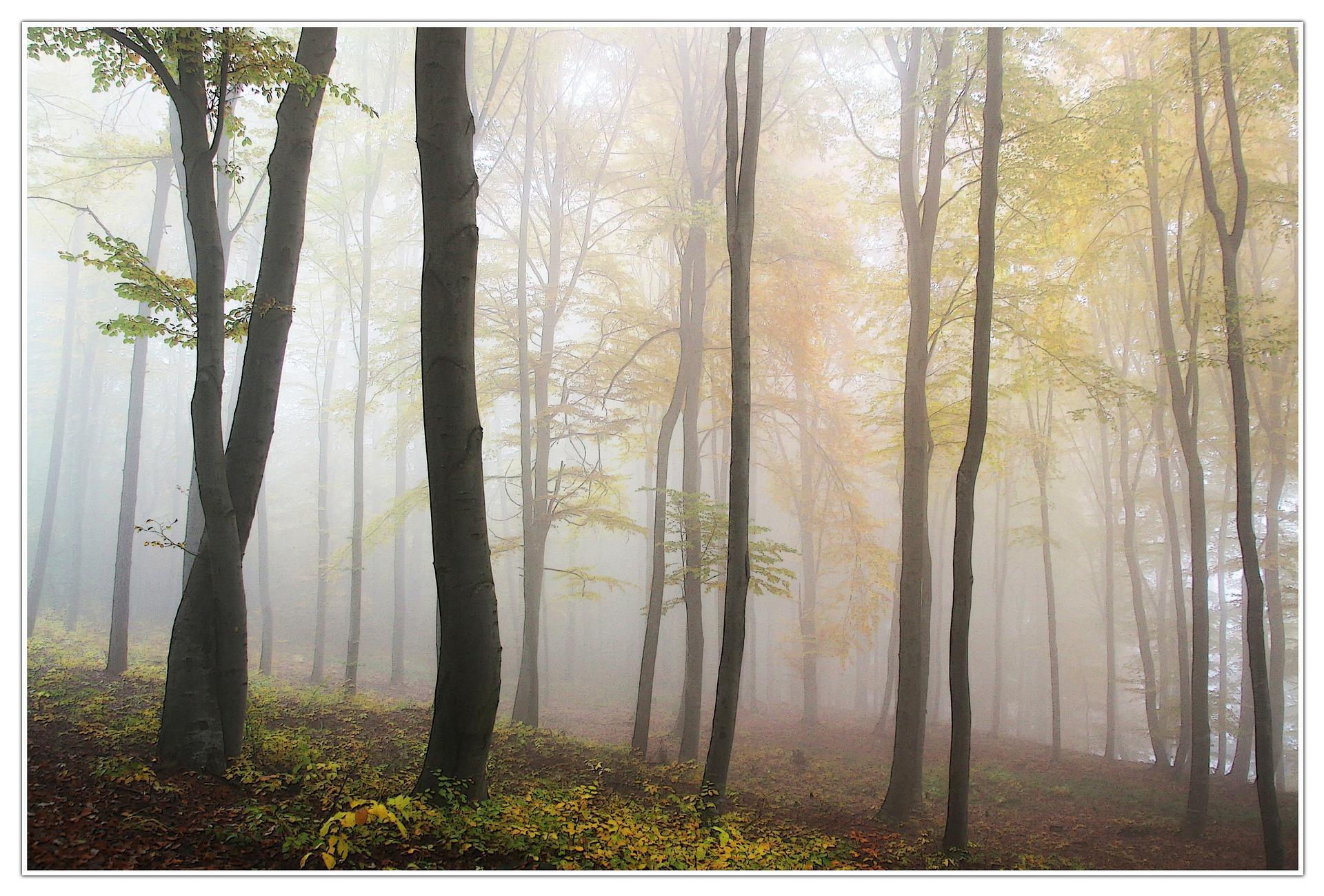 autumn-194834_1920.jpg