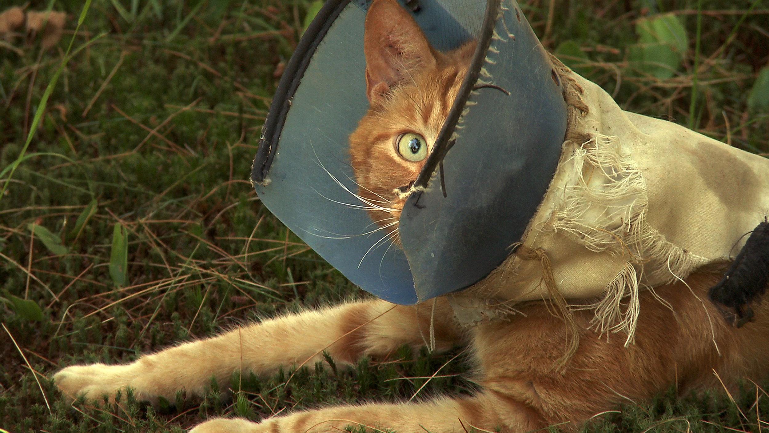 cat w hood one eye.jpg