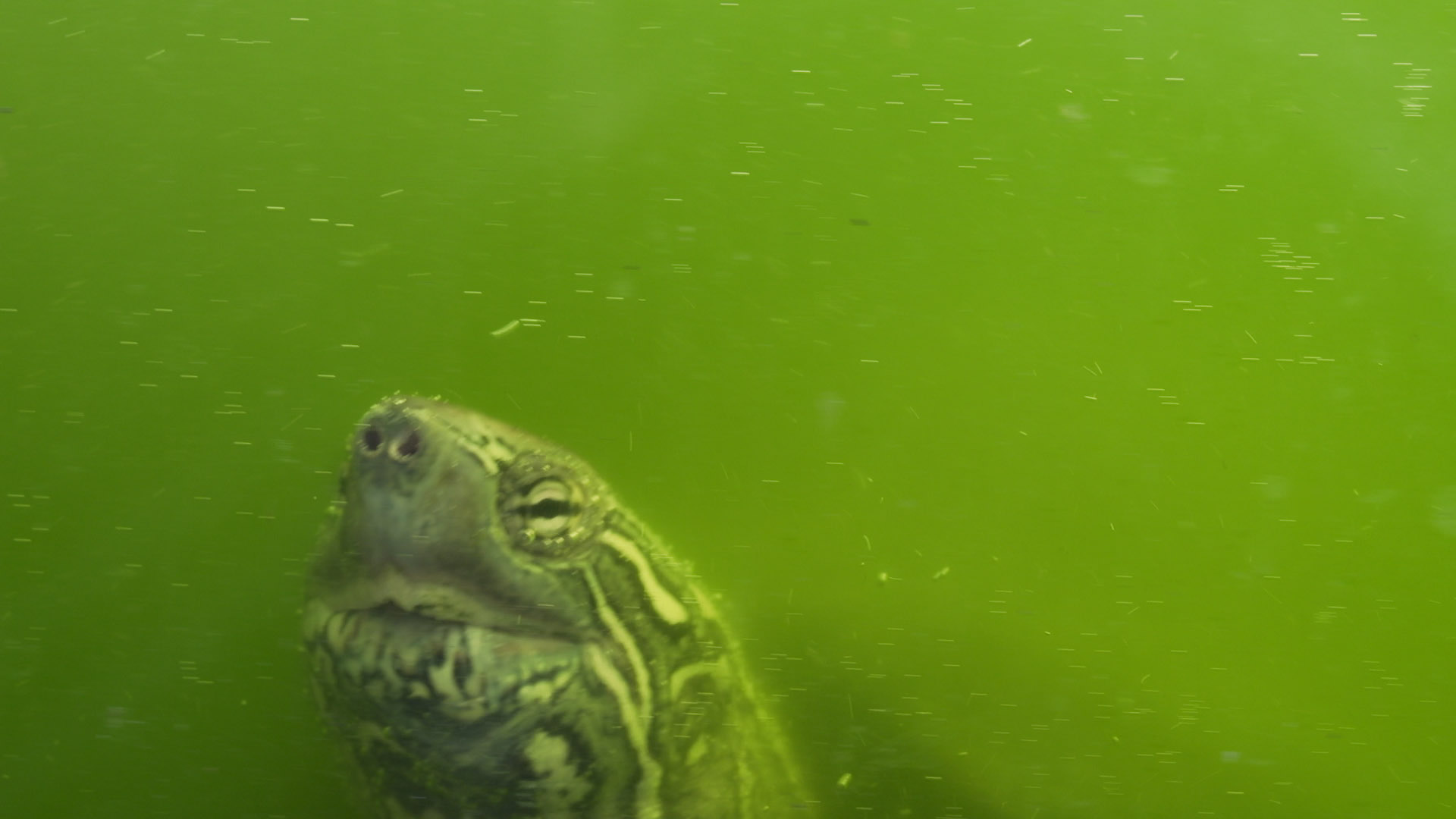 TINY turtle.jpg