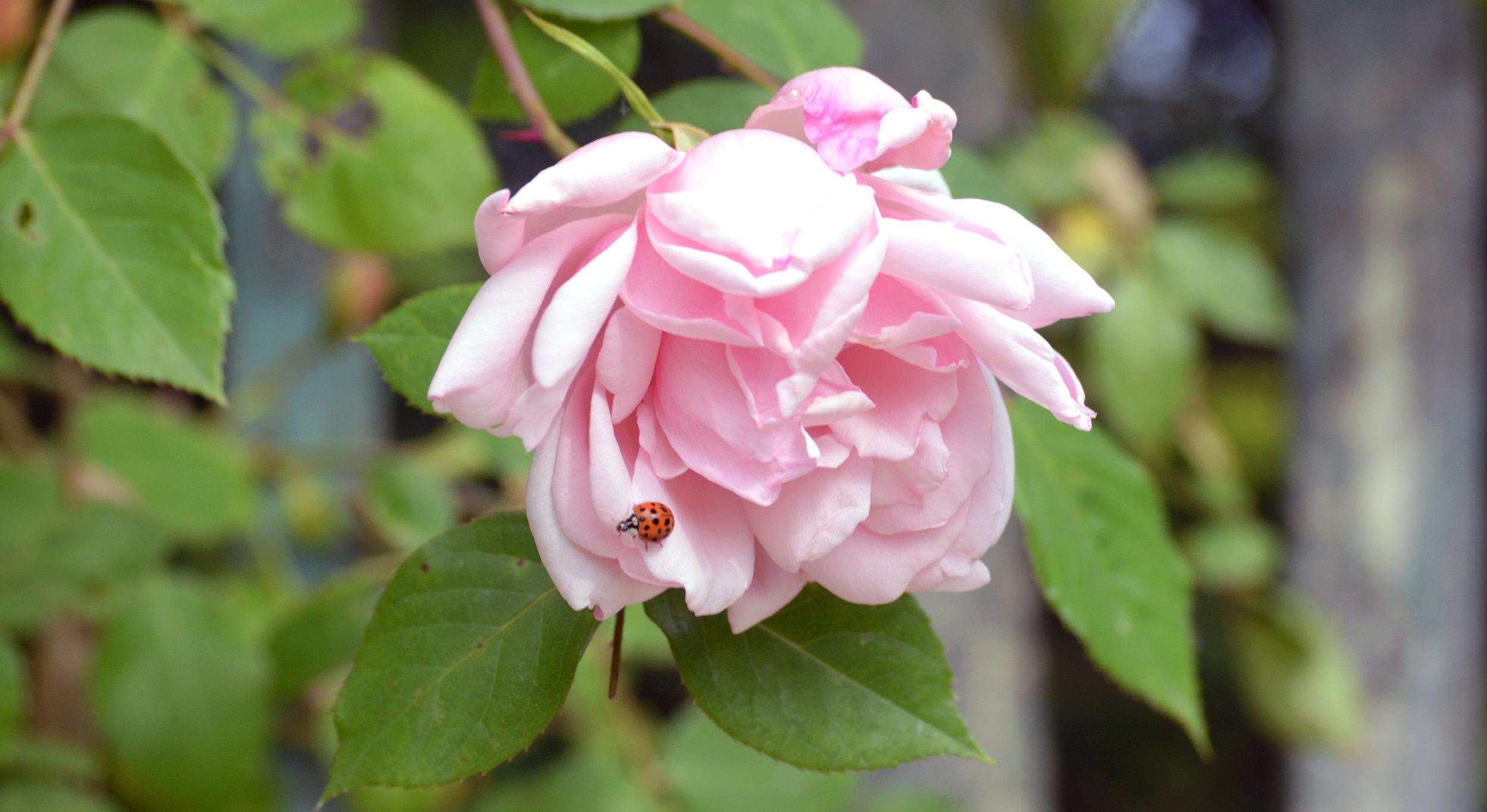flowerbug.jpg