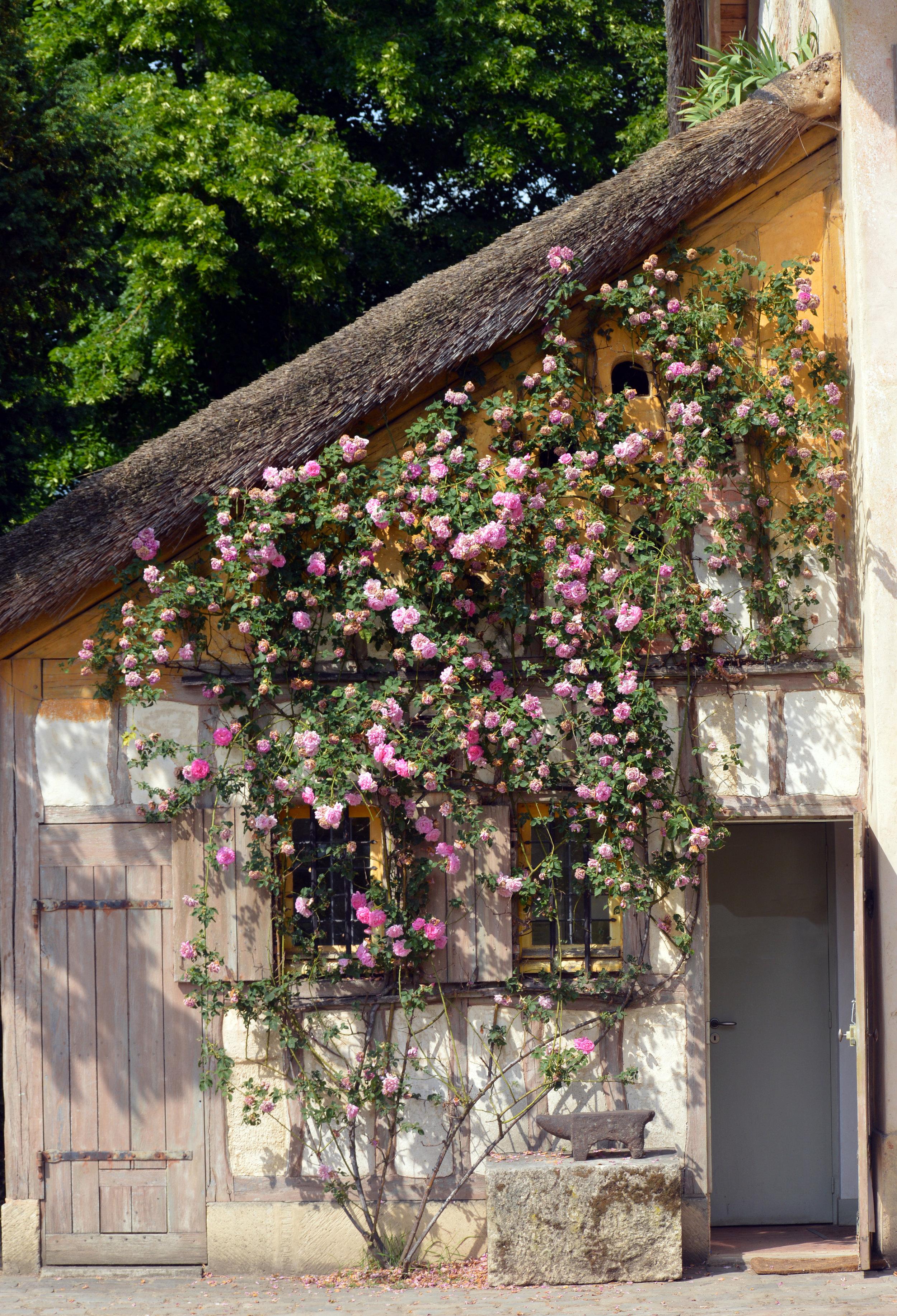 gardenhouse.jpg