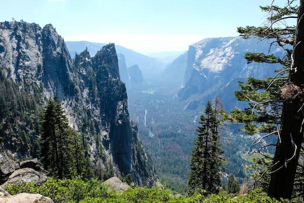Yosemite Valley greenery.