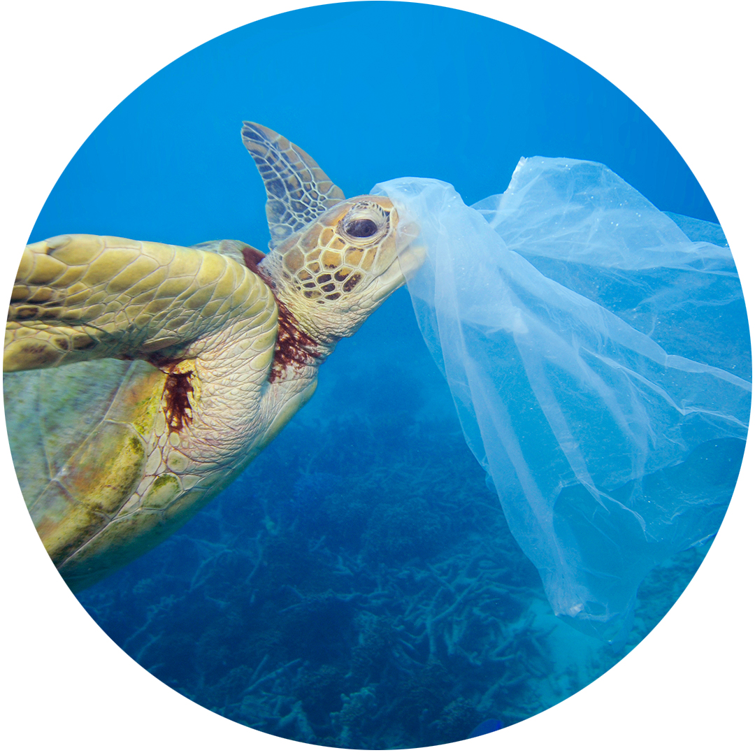 plasticbags-greenpeace.jpg