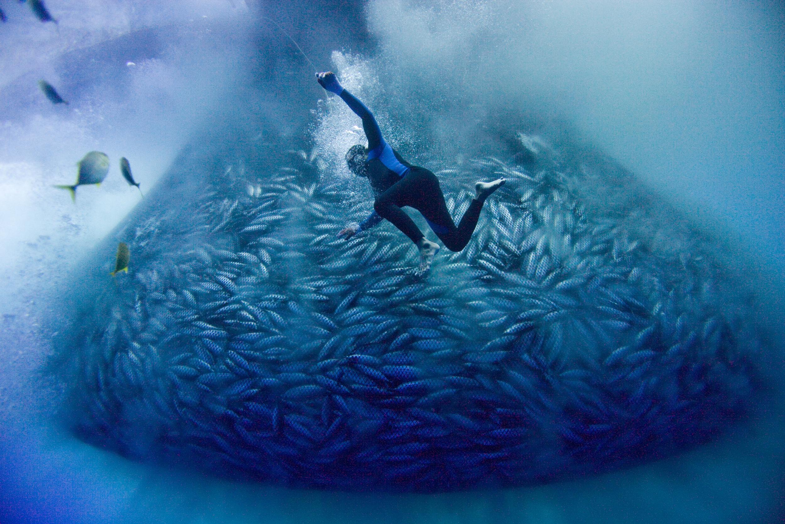Photo by Alex Hofford / Greenpeace