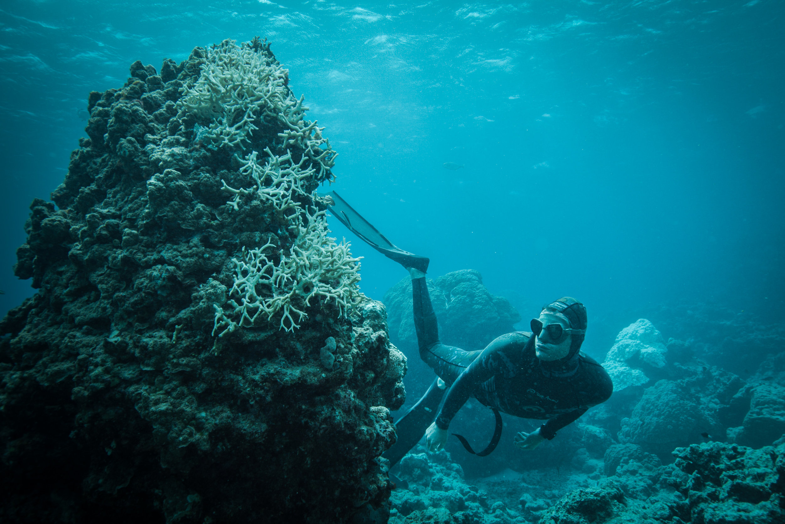BLUE - lucas-handley-coral-bleaching.jpg