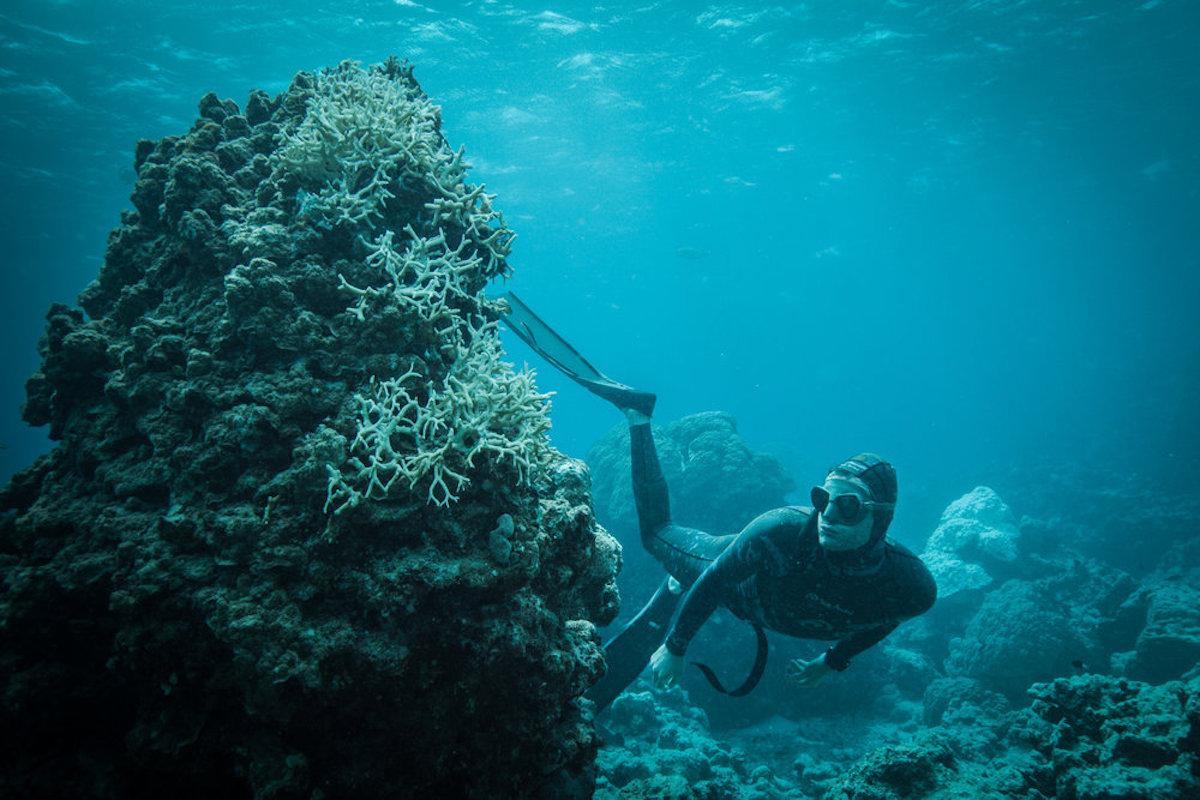 BLUE-lucas-handley-coral-bleaching.jpg