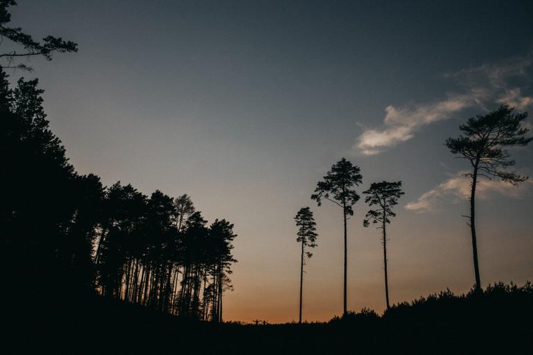 46_sesja_w_lesie_wroclaw_fotograf.jpg
