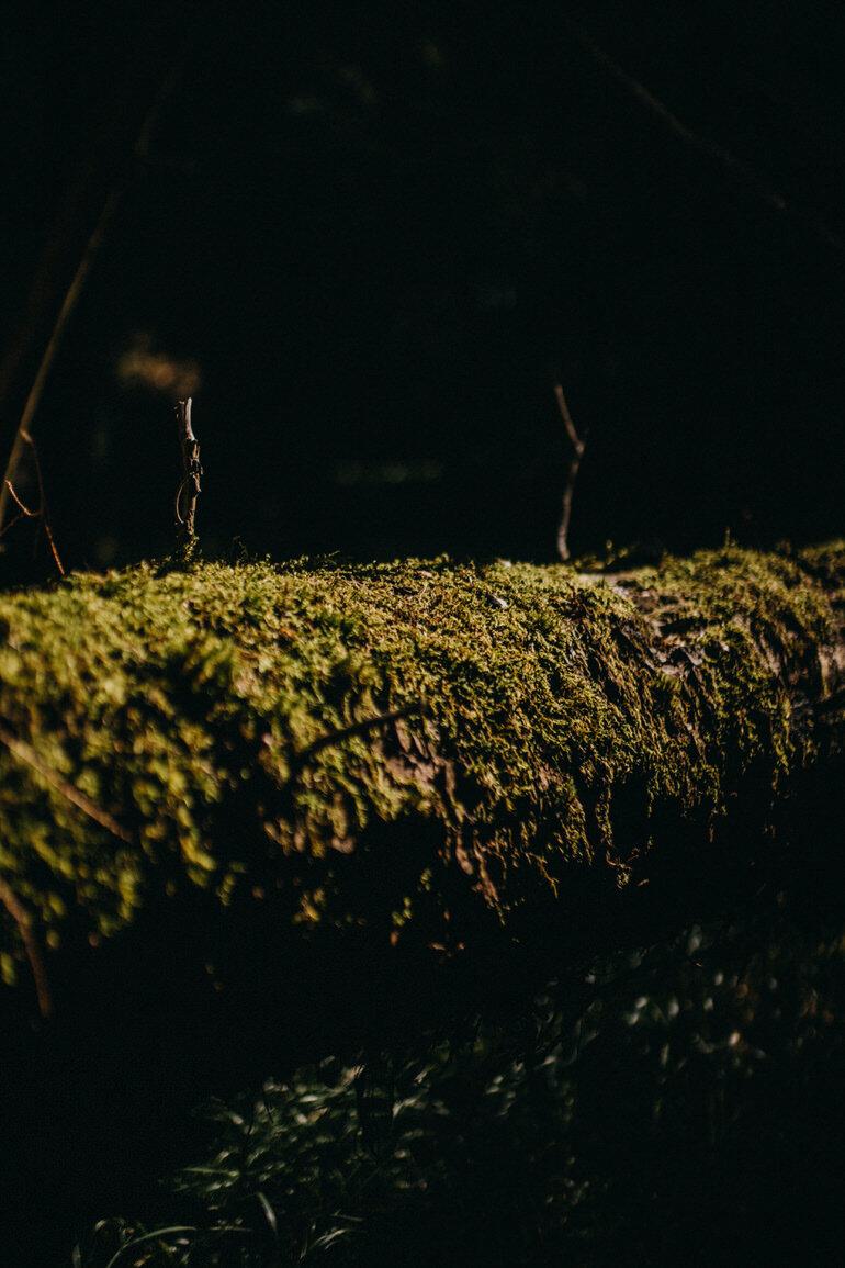7_sesja_narzeczenska_w_lesie.jpg