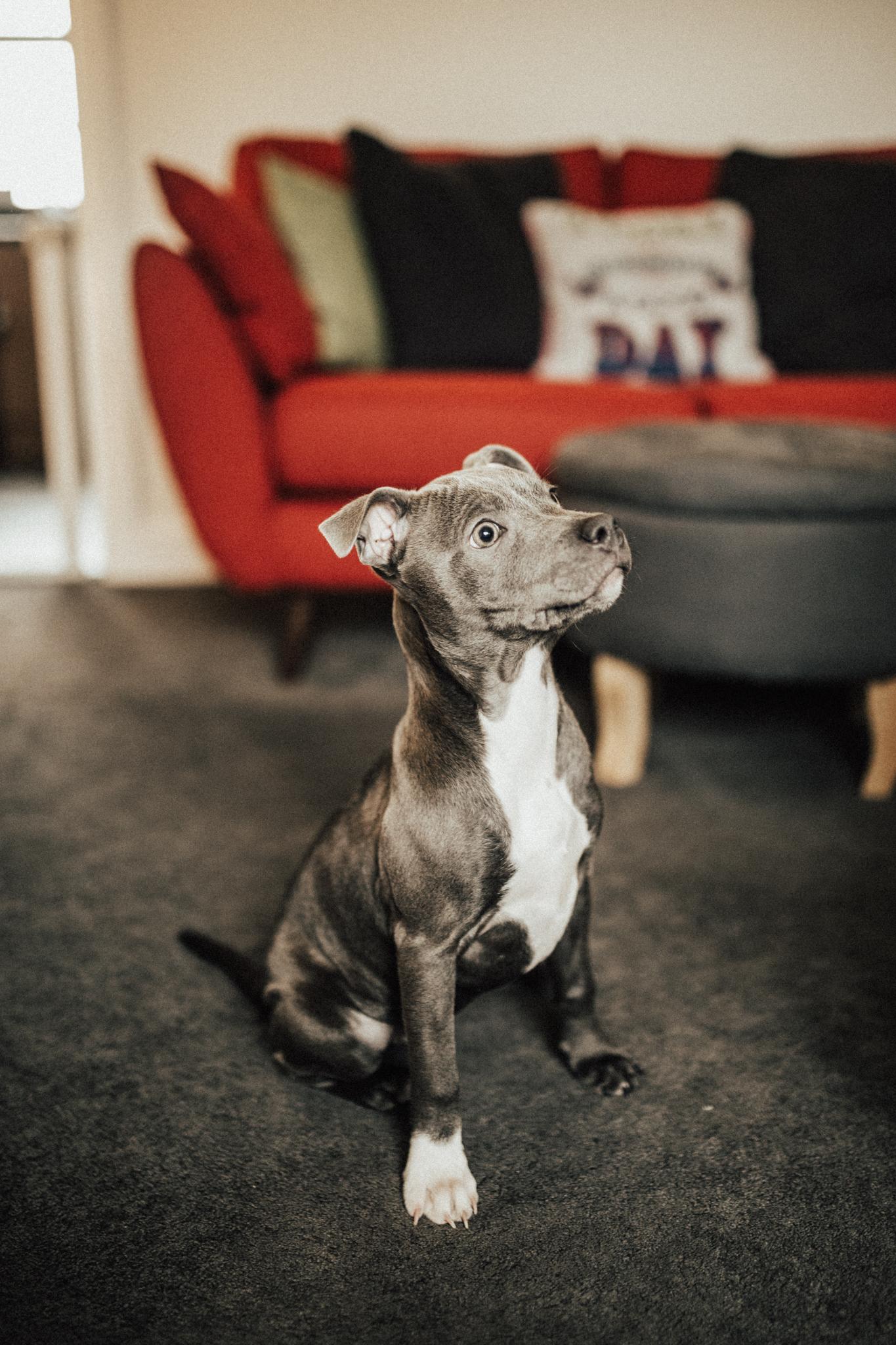 Dog-Human-Session-Photography-Darina-Stoda-Animal-Indigo-2.jpg