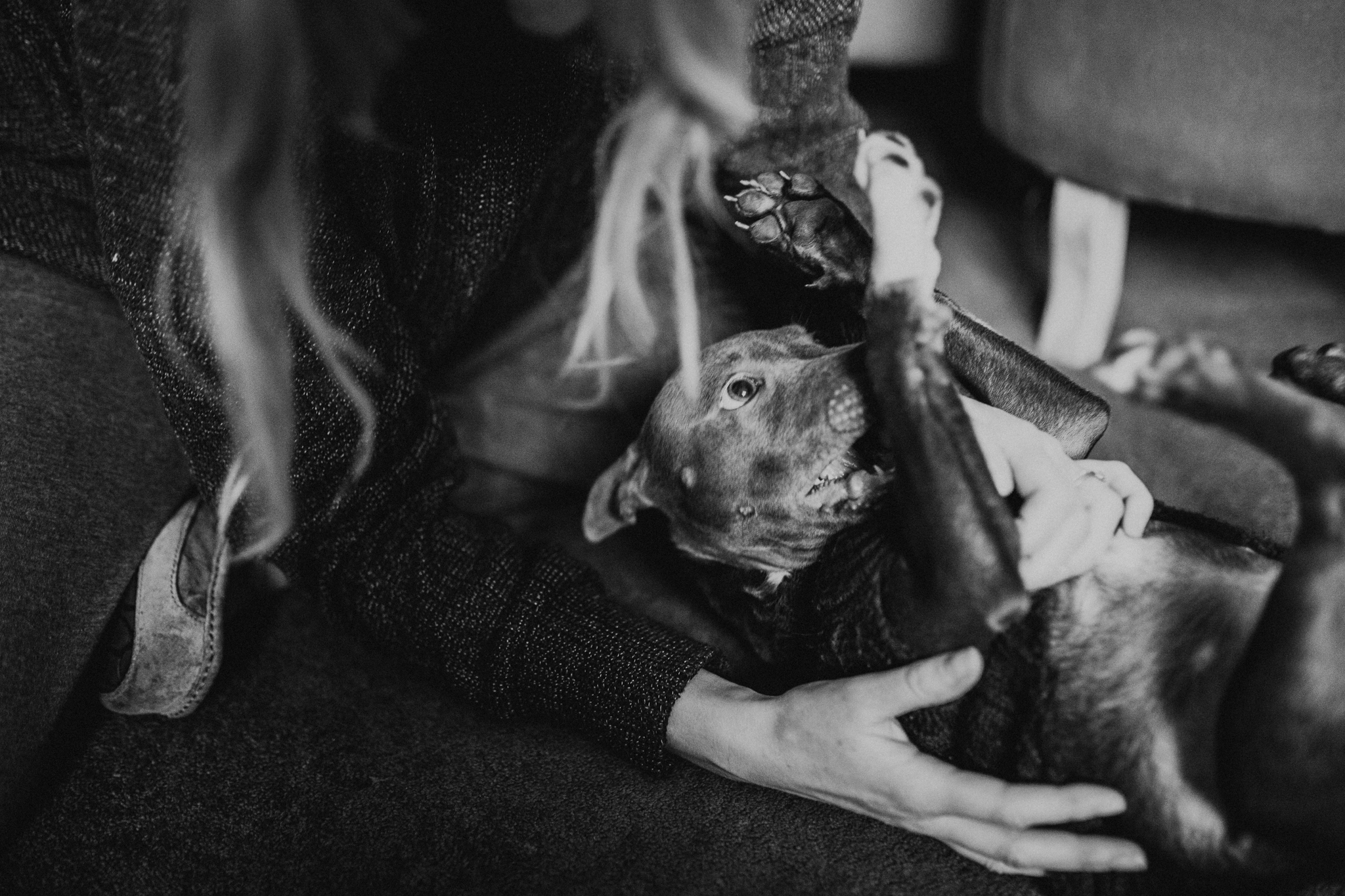 Dog-Human-Session-Photography-Darina-Stoda-Animal-Indigo-9.jpg