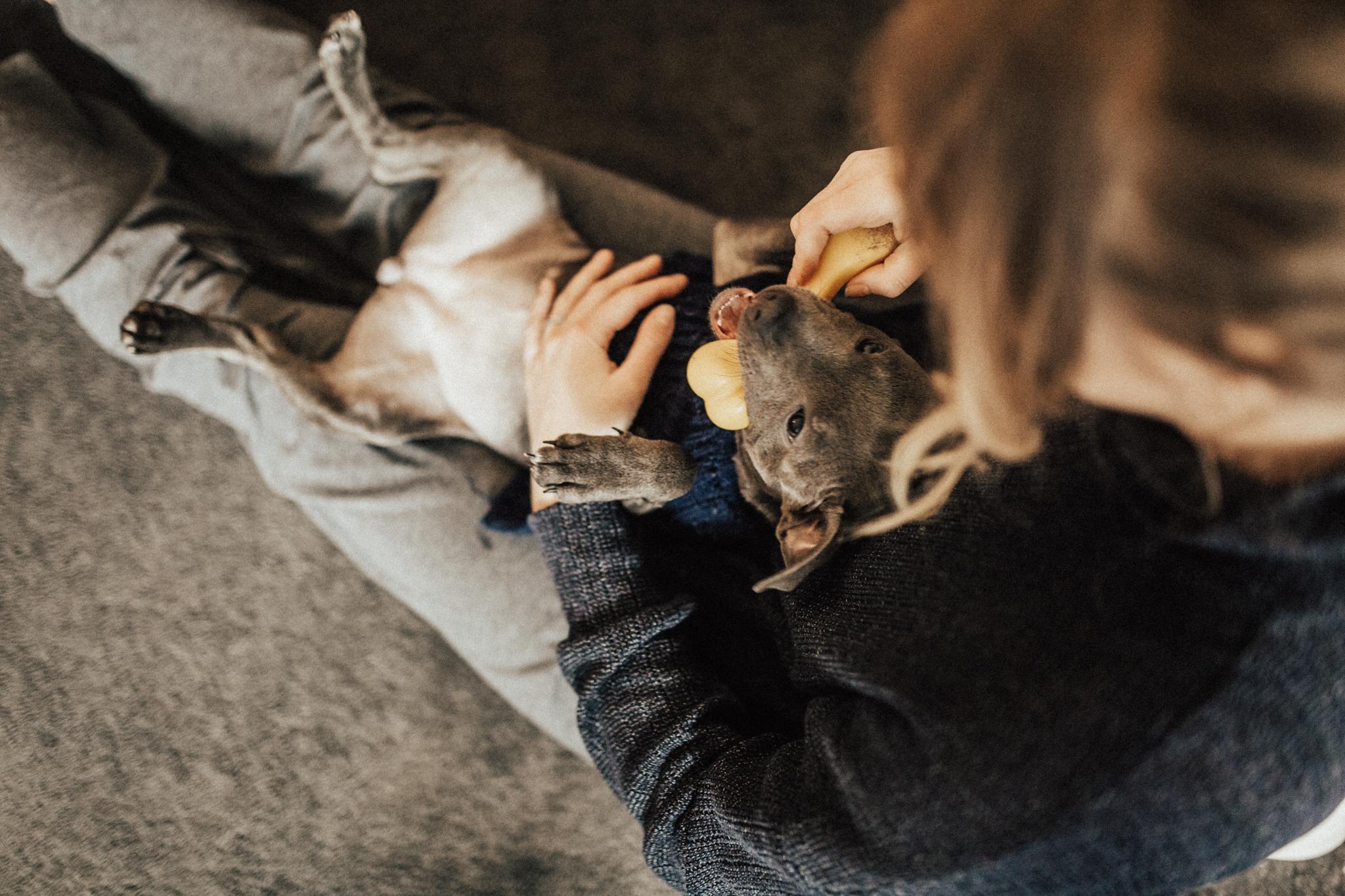 Dog-Human-Session-Photography-Darina-Stoda-Animal-Indigo-11.jpg