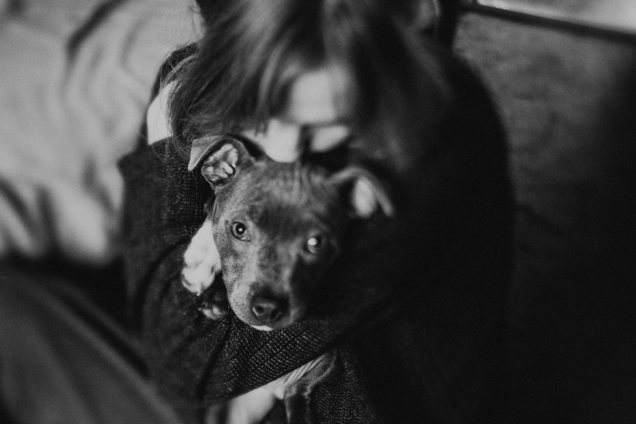 Dog-Human-Session-Photography-Darina-Stoda-Animal-Indigo-13.jpg