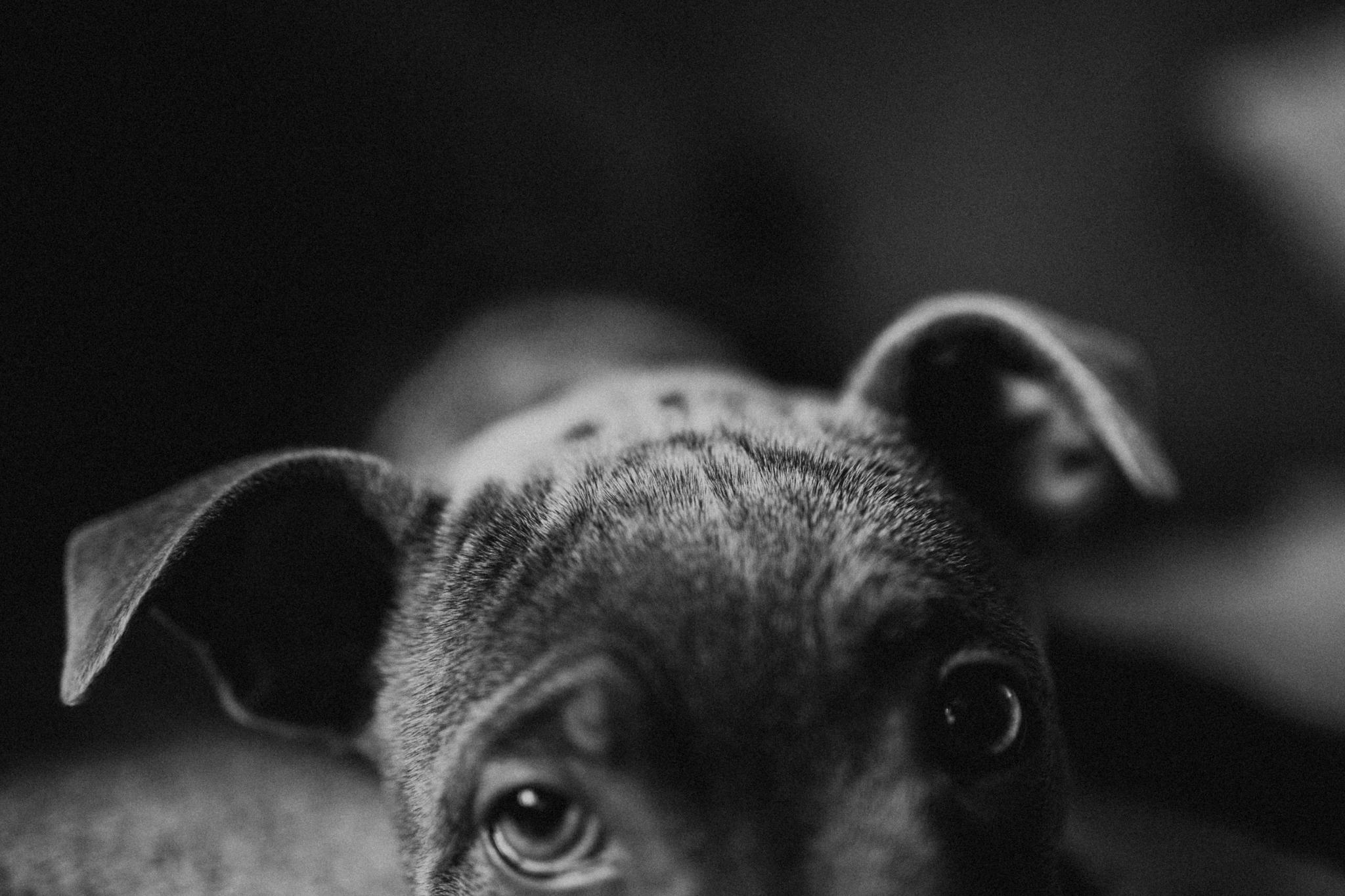 Dog-Human-Session-Photography-Darina-Stoda-Animal-Indigo-19.jpg