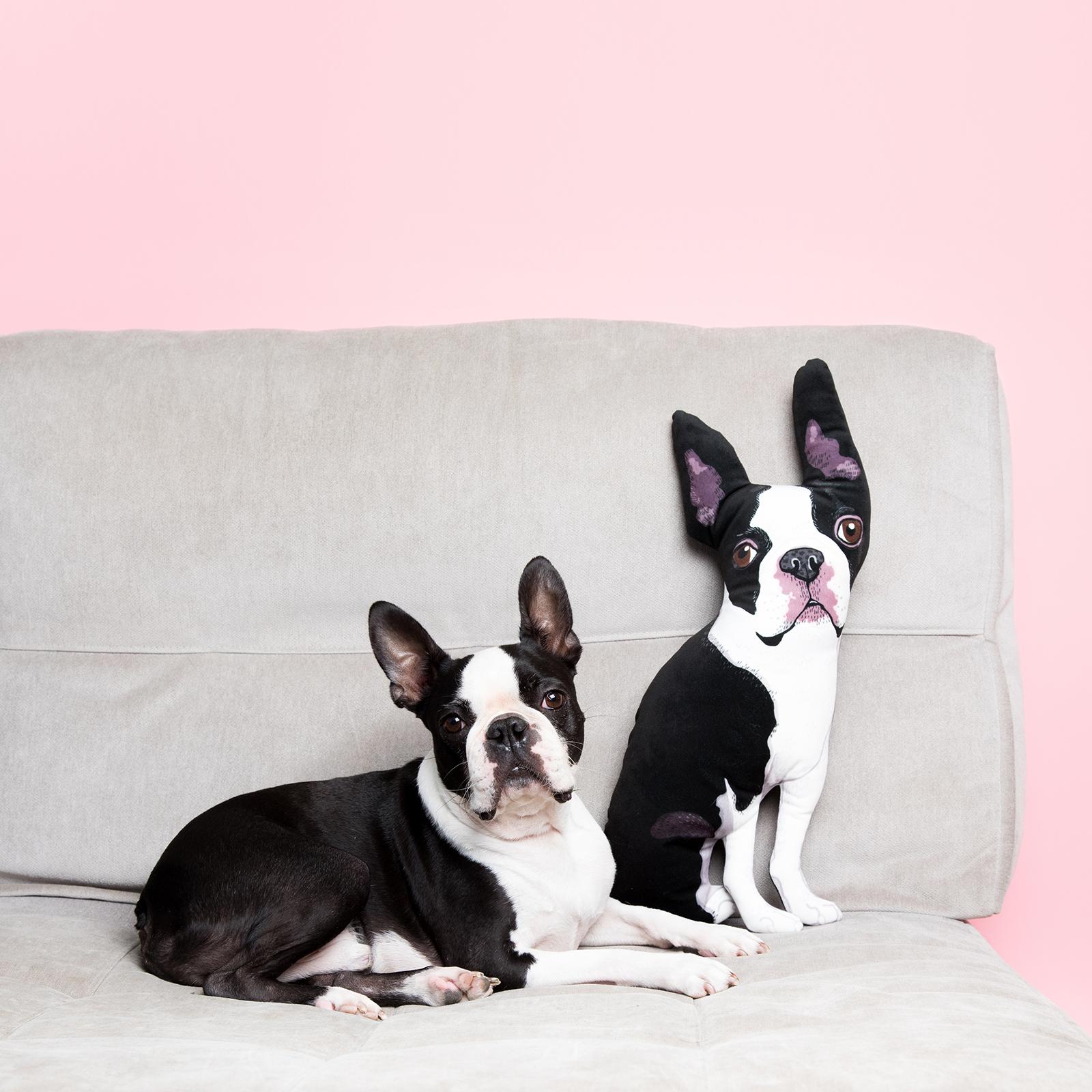 boston terrier dog pillow