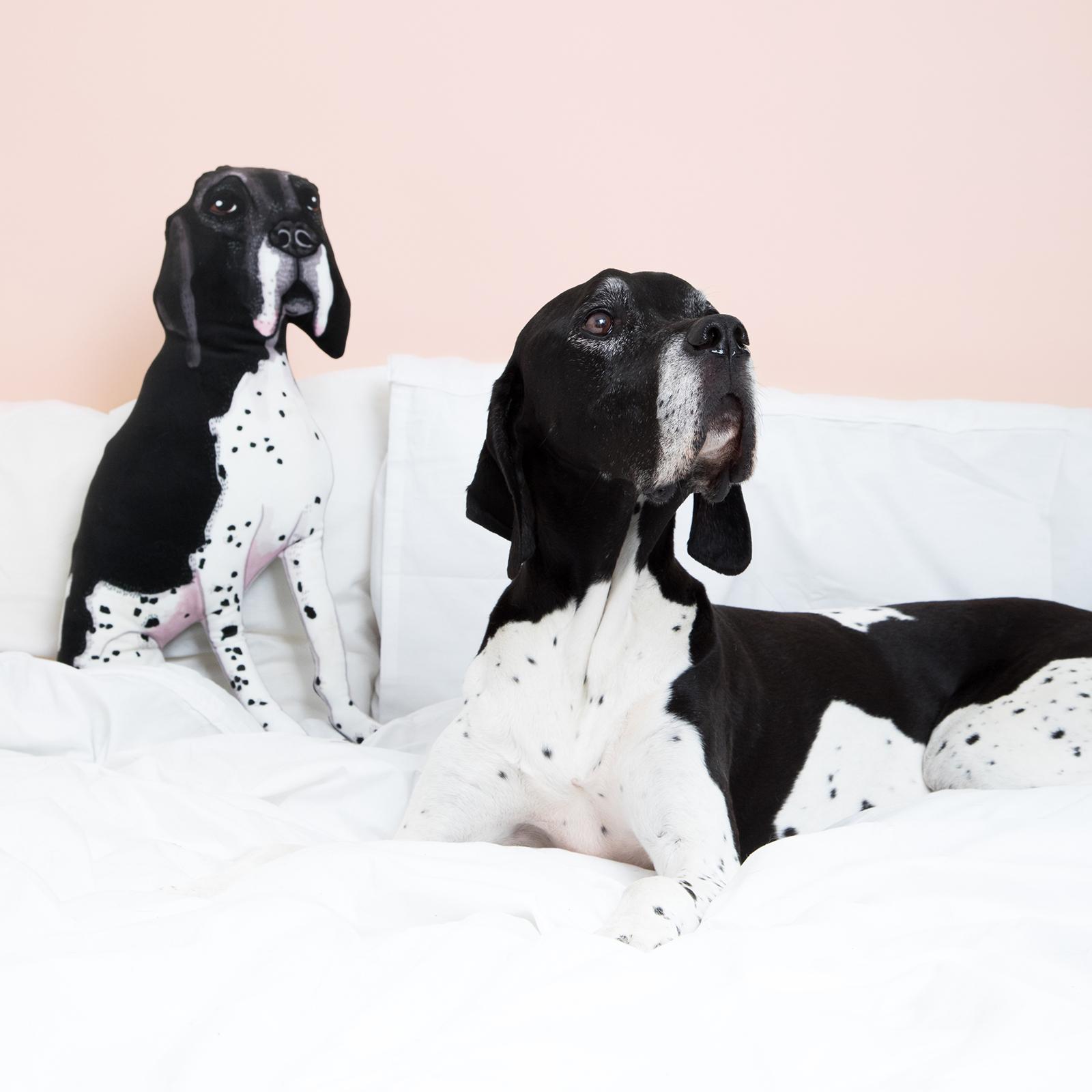 english setter dog cushion