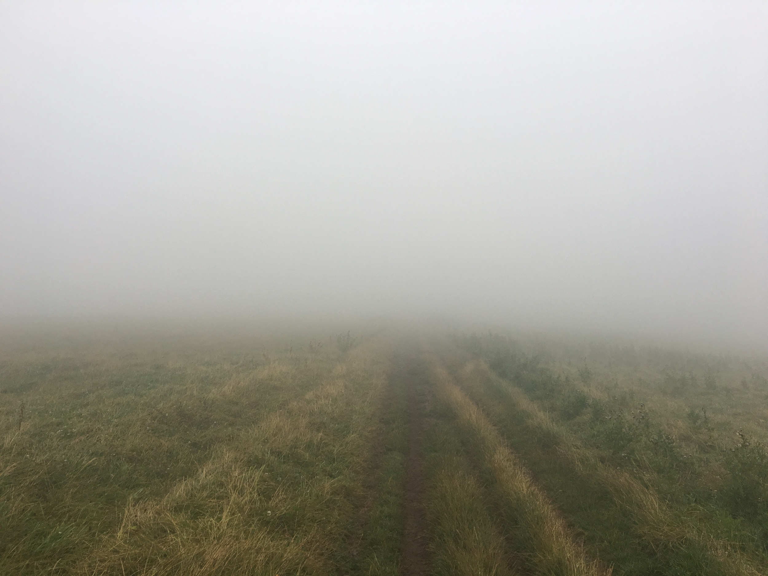 30 mile walk and very misty on the South Downs