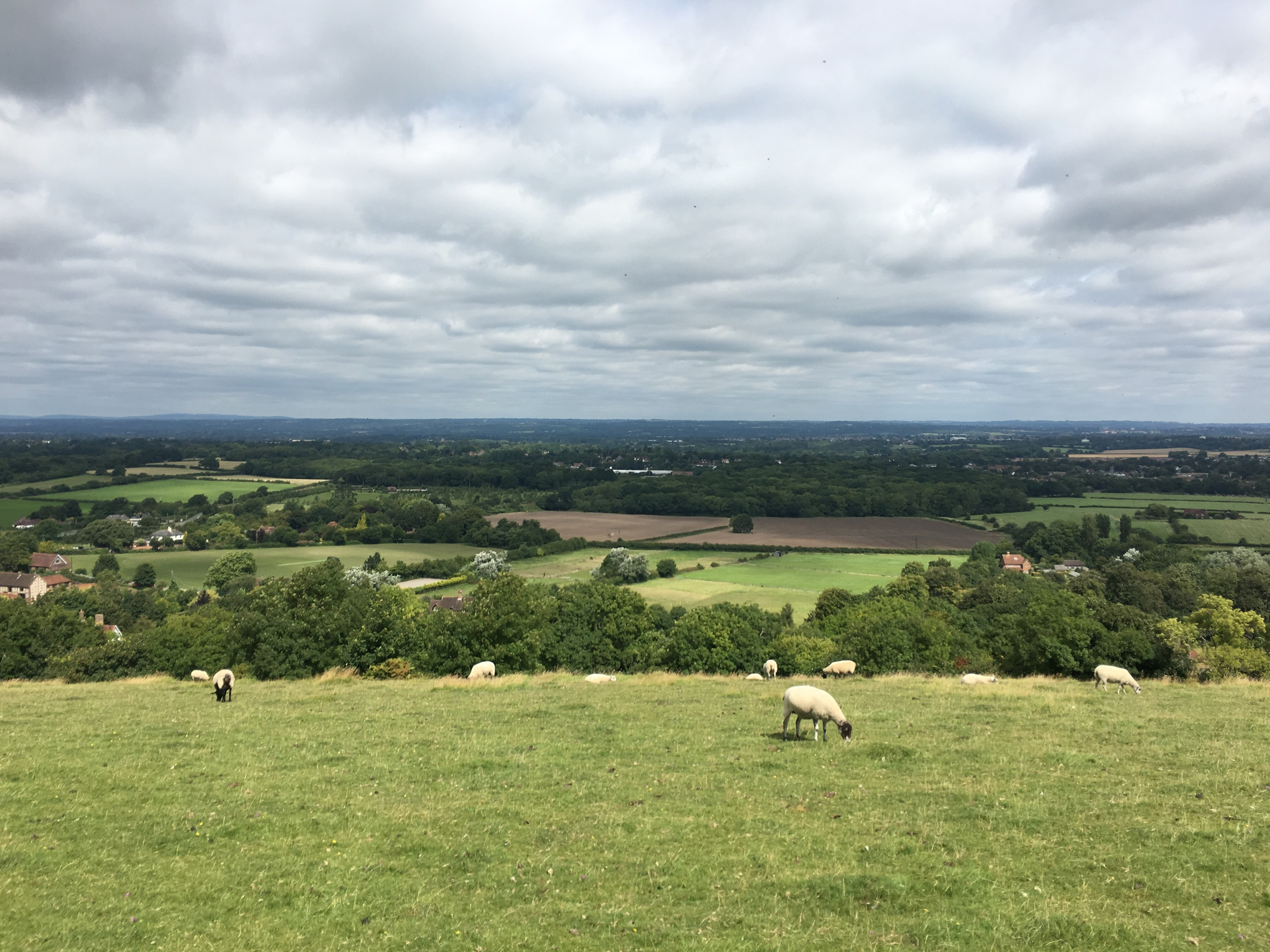 My four hour walk, this time it was sunny on top of the South Downs