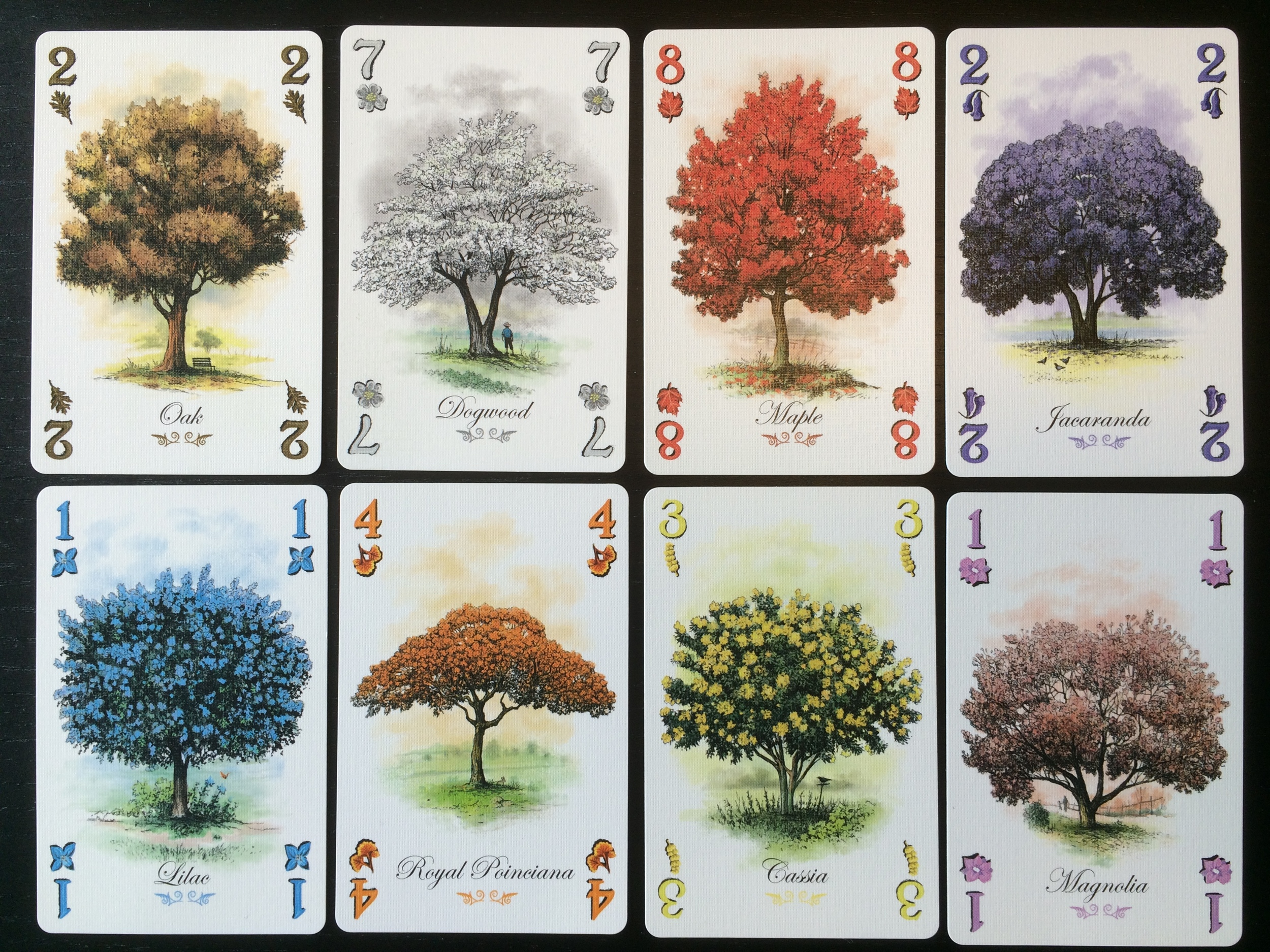 Arboretum - Meaningful Decisions: Dan Cassar on Design Choices in Arboretum