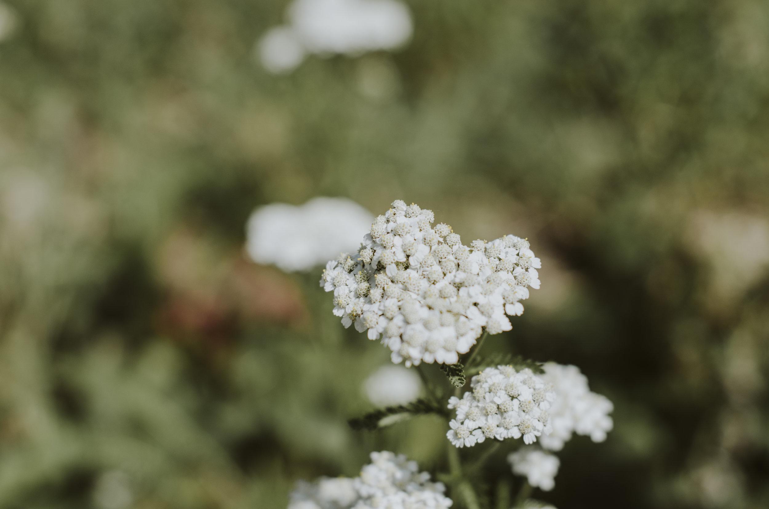 CamPhotoDay1 (4).jpg