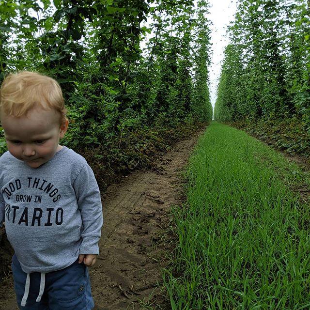 Crop scouting