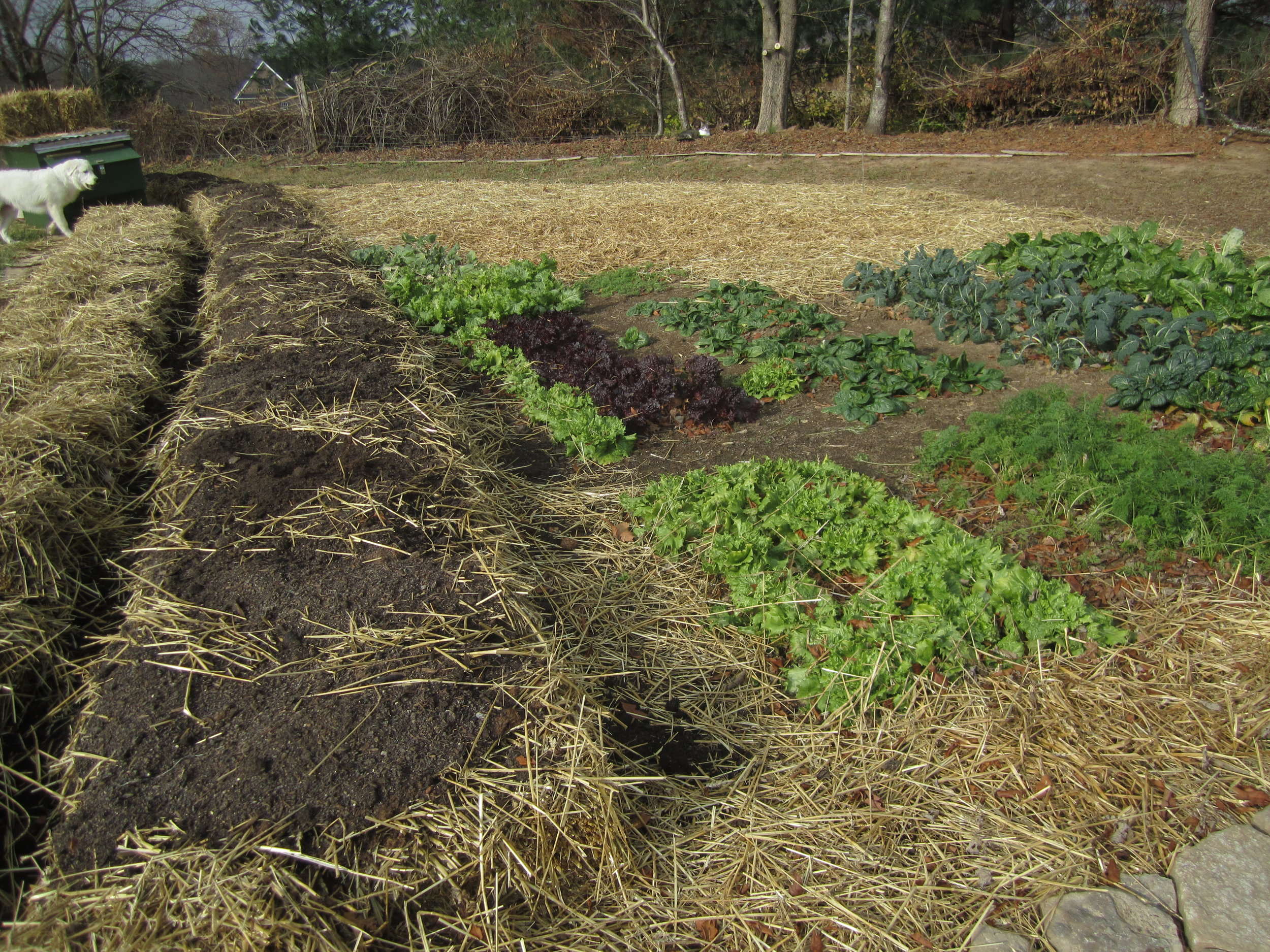 This sheet mulched bed will get one more truckload of compost before a final mulch is added on top.