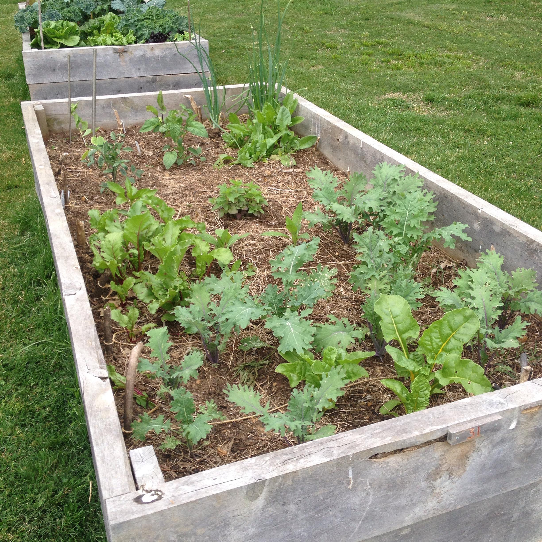 raised-bed-garden.JPG