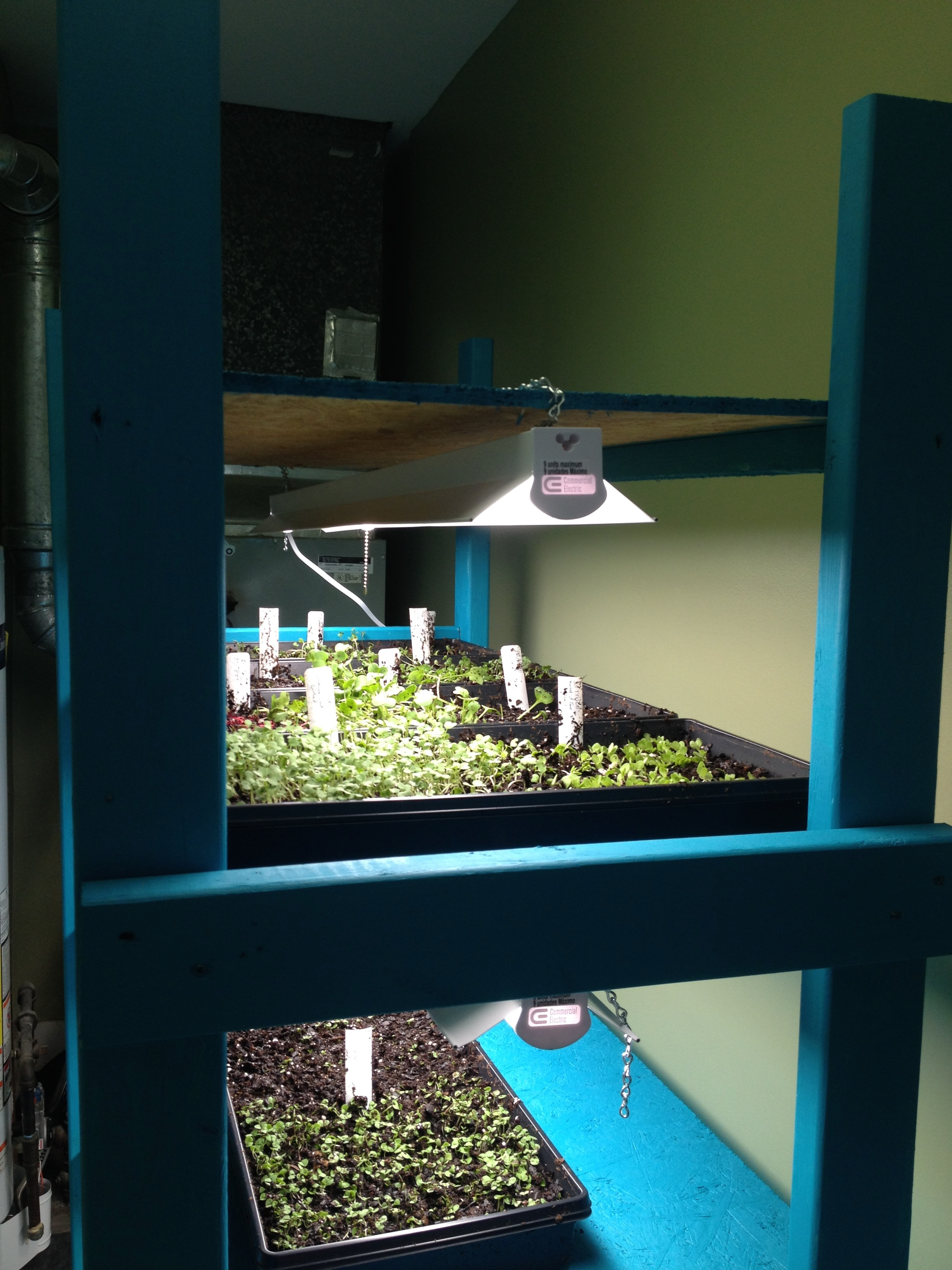 "My ""germination station"" shortly after building it. I later doubled up the lights."