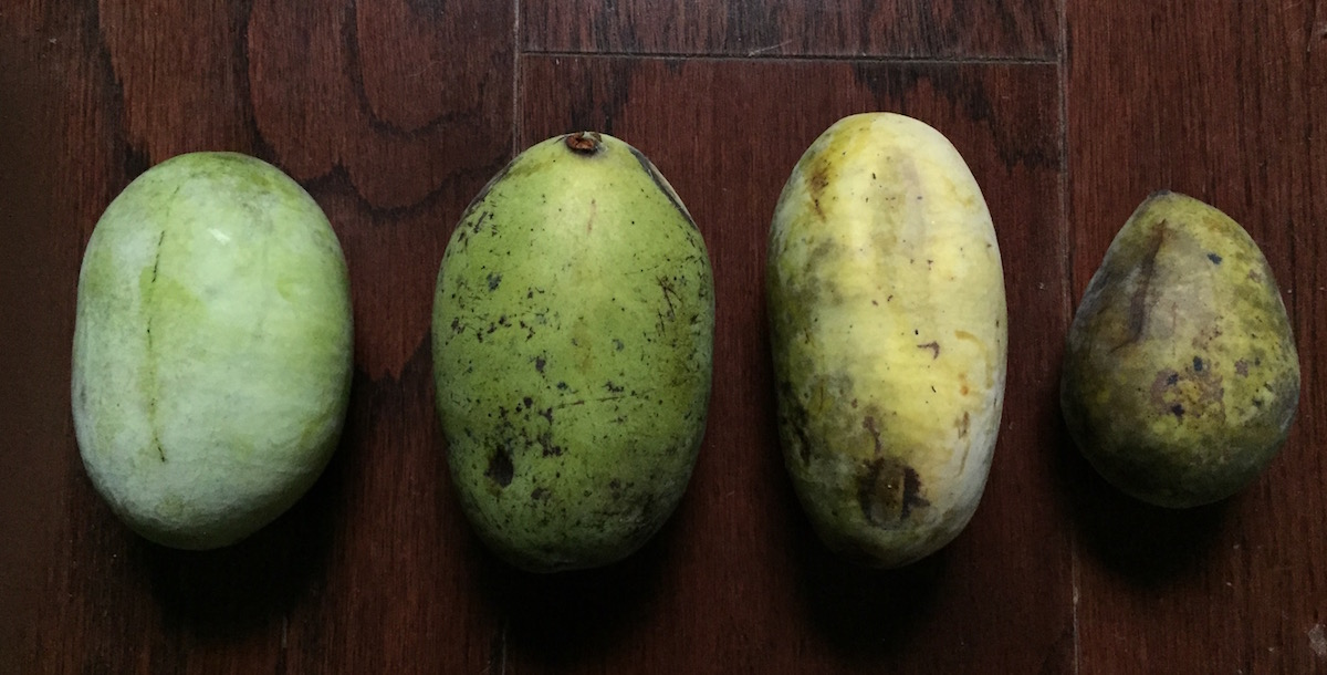 Left to right: least to most ripe. #3 is perfect and ready to eat now; #4 is a little overripe.