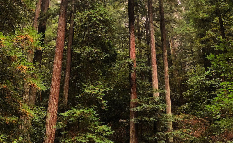 redwoods-grief.jpg