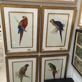 Parrot prints for every room.