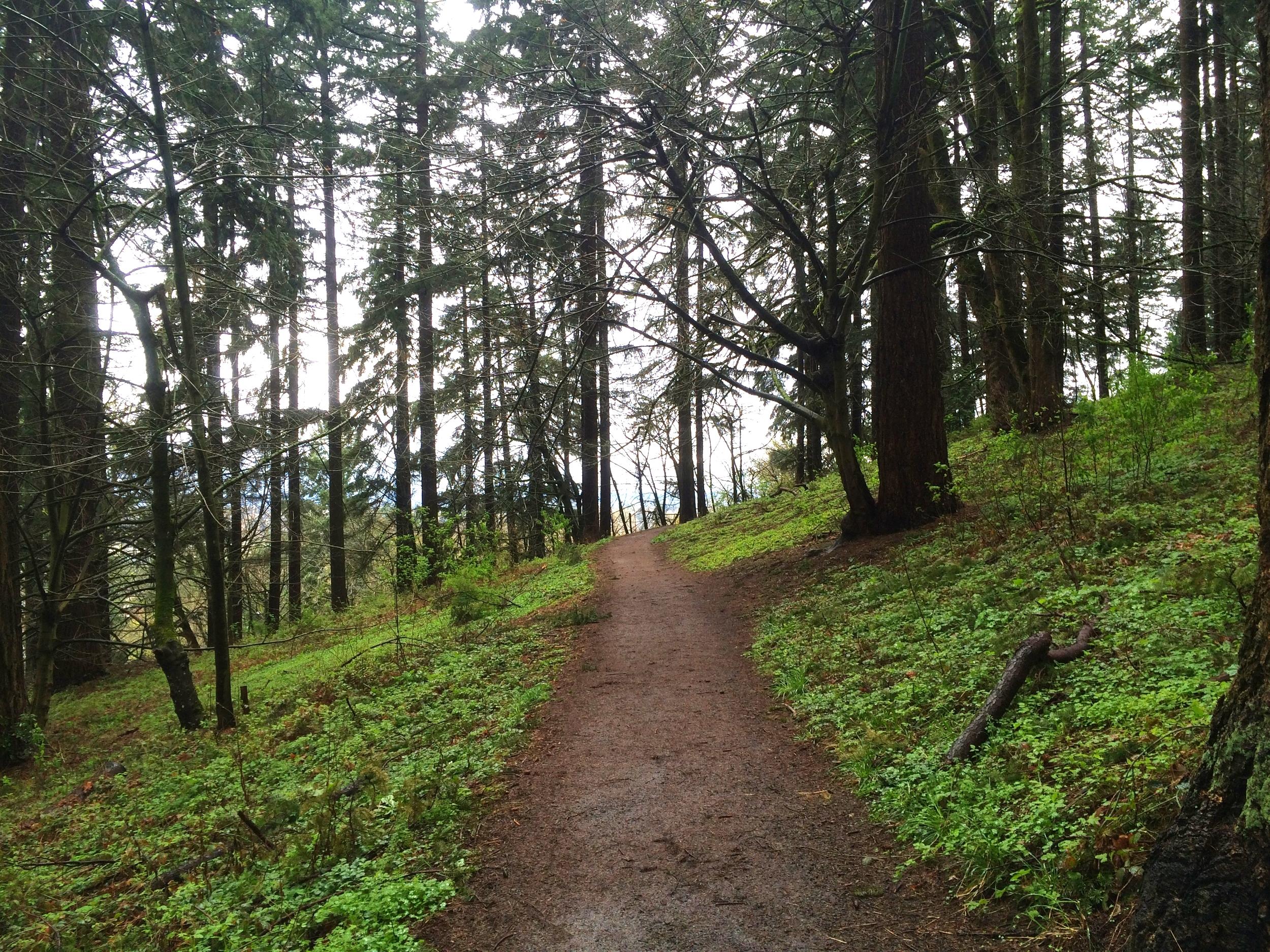A path on Mt. Tabor.