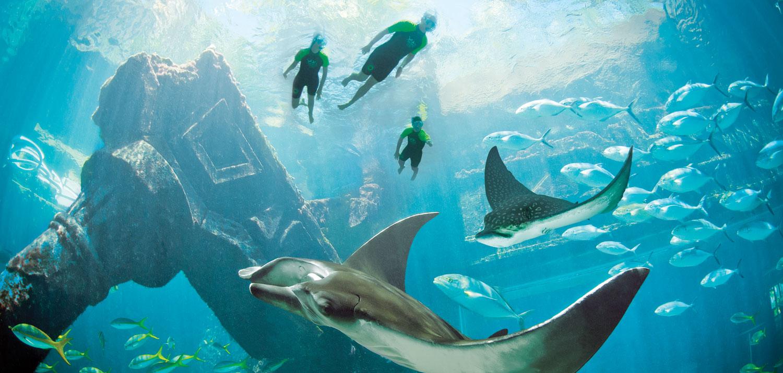 SnorkelTheRuins.jpg