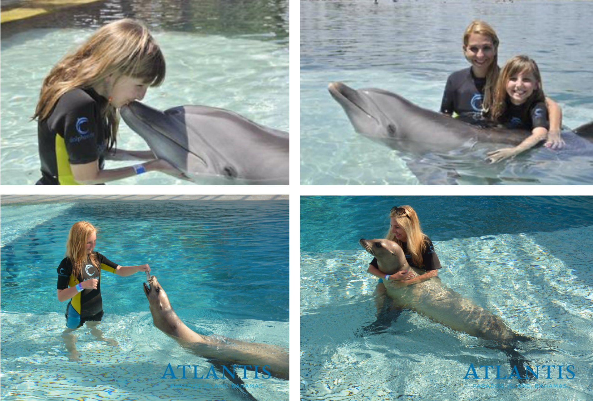 dolphin cay.png