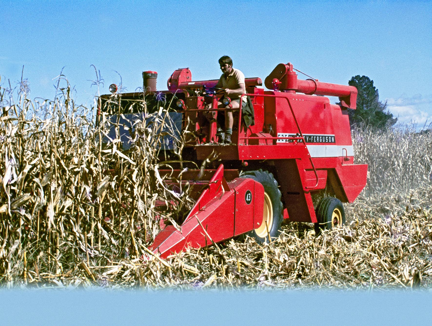 Maize, c. 1970s / 2018
