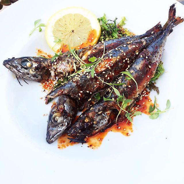 Grilled Mackerel with Mustard Greens 👌🏻 . . . . . . 📷@reirarose . . . . . . . . #foodie #foodiesofinstagram #instafood #mackerel #eat #sandiegofoodblogger #sandiegofoodbloggers #youstayhungrysd #sandiegofood #sdfoodies #sdfoodie #foodofsandiego #foodsandiego #eatstagram #eatersandiego #sandiegoeats #sandiegoeater #zagat #foodstagram #foodgrammers #foodiesofig #chefsroll #newdish #chefs_eye #theartofplating #wildchefs #chefsofinstagram #instachef #cheflife #mystorywithmichelin