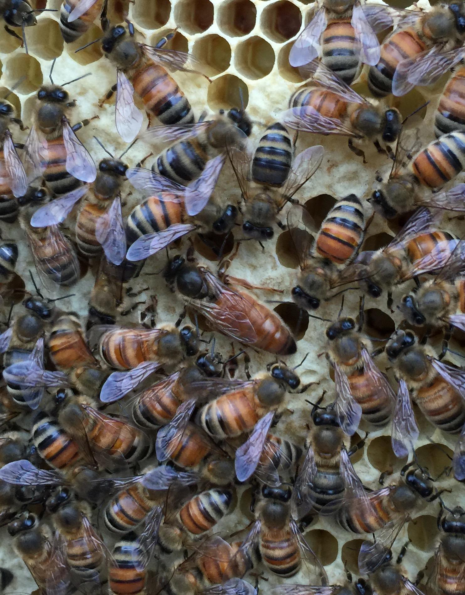 Gaiser Bee Co. host a hive