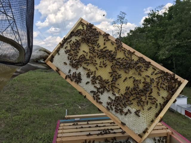 Gaiser Bee Co Host A Hive Cincinnati Ohio
