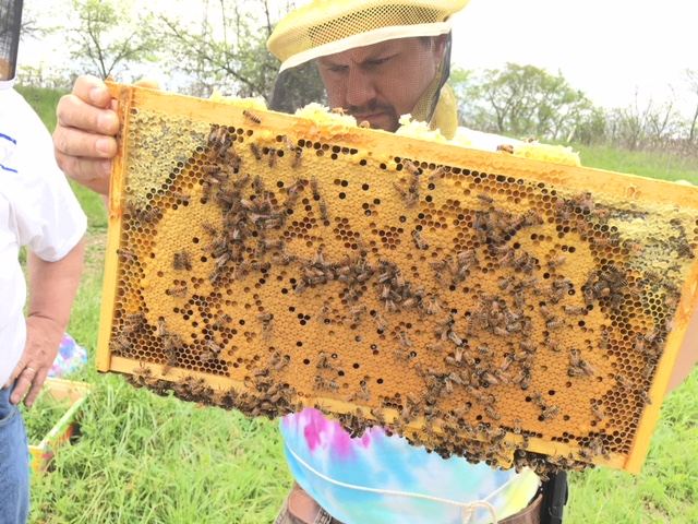 The Queen Bees - Host A Hive Gaiser Bee Co