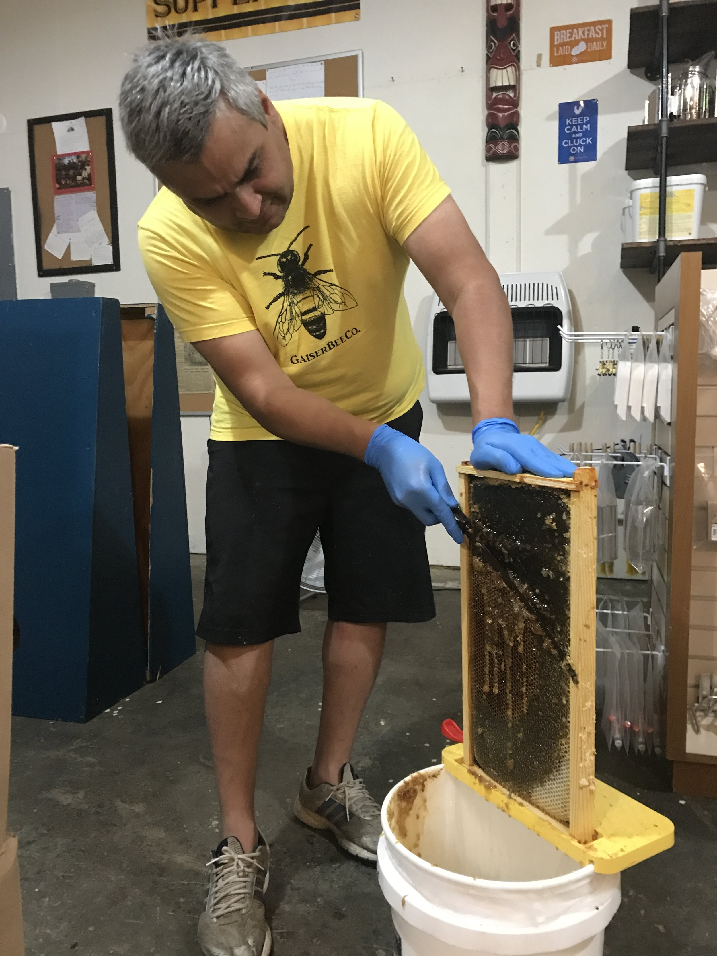 Extracting Honey Host A Hive Gaiser Bee Co.