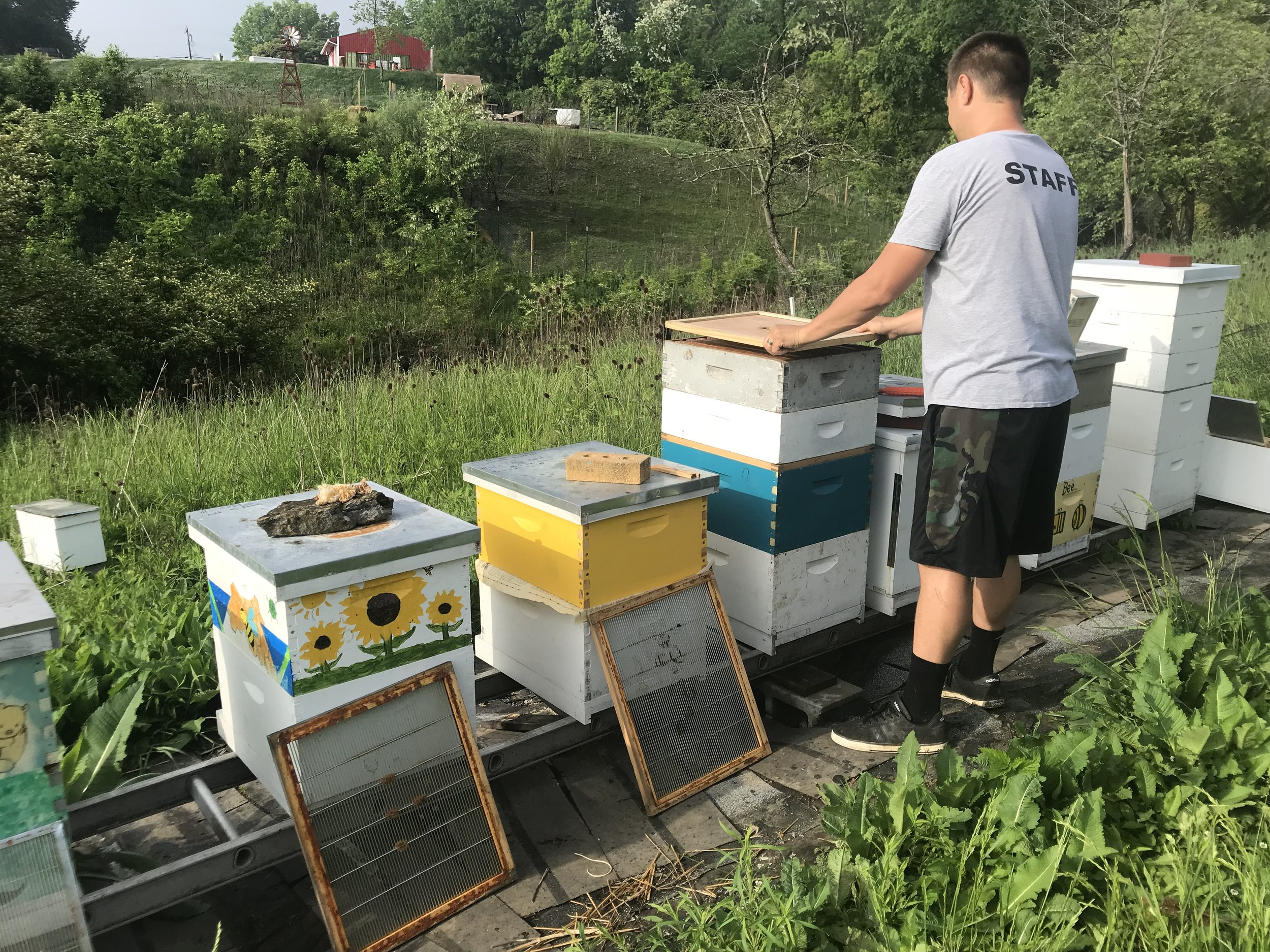Host A Hive Gaiser Bee Co.