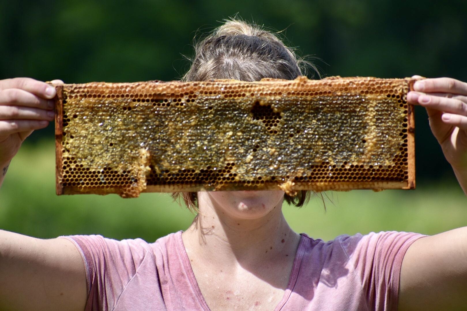 Frames Host A Hive Gaiser Bee Co.