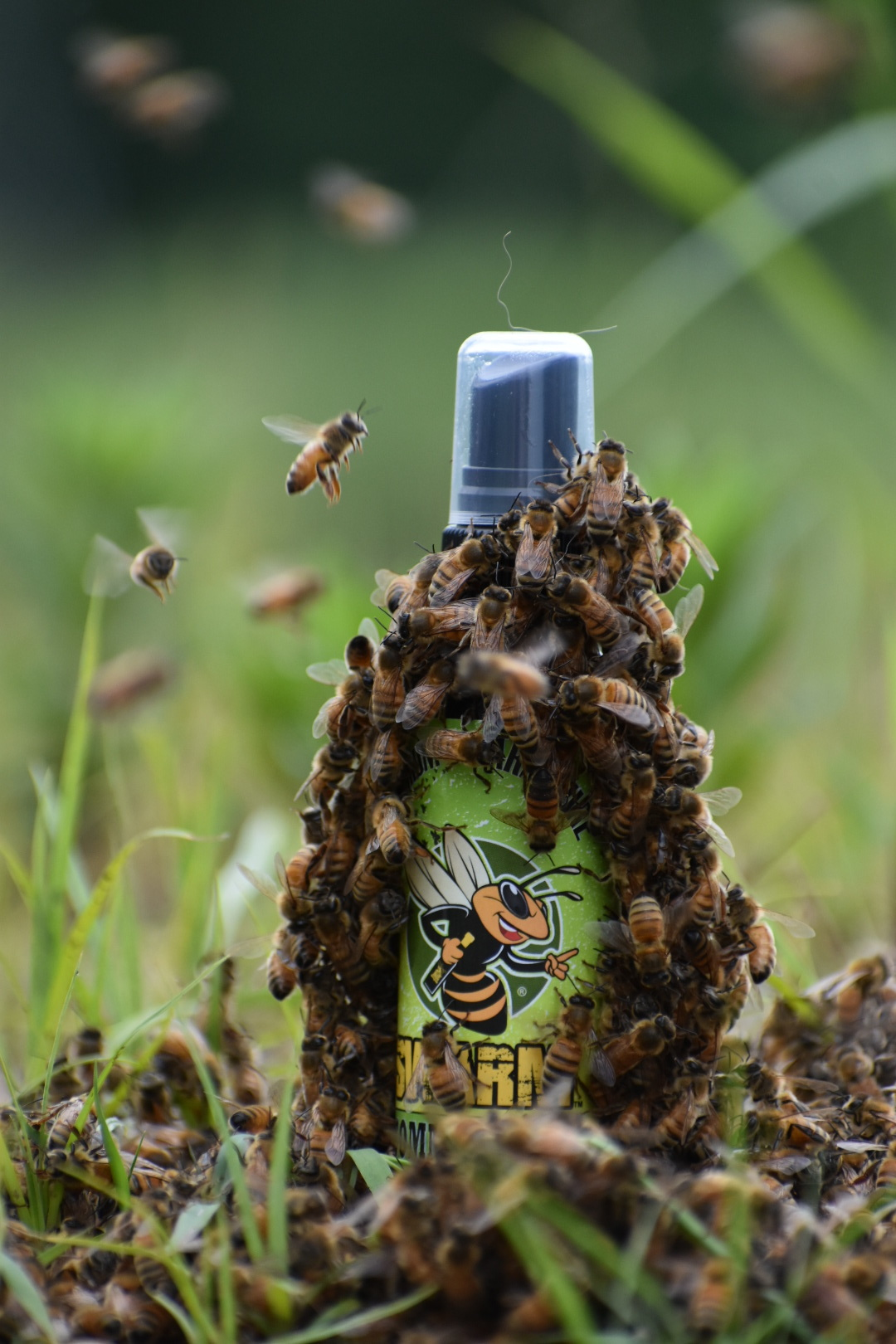 Host A Hive Swarm