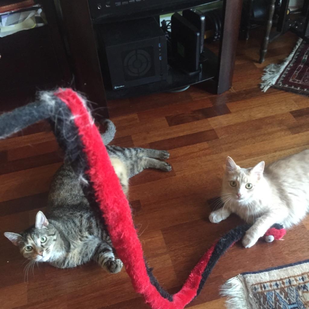 Lia&Artemis.jpg